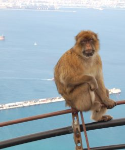 Visit to Gibraltar from Seville