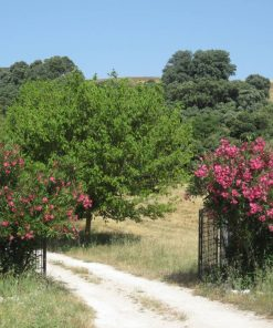 Outdoor and hiking tour from Seville