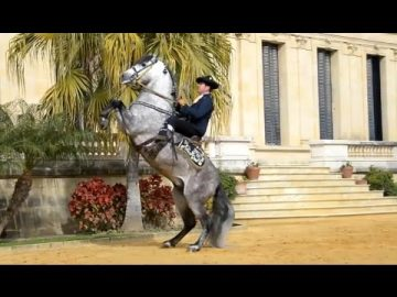 Riding a Spanish horse in Andalusia