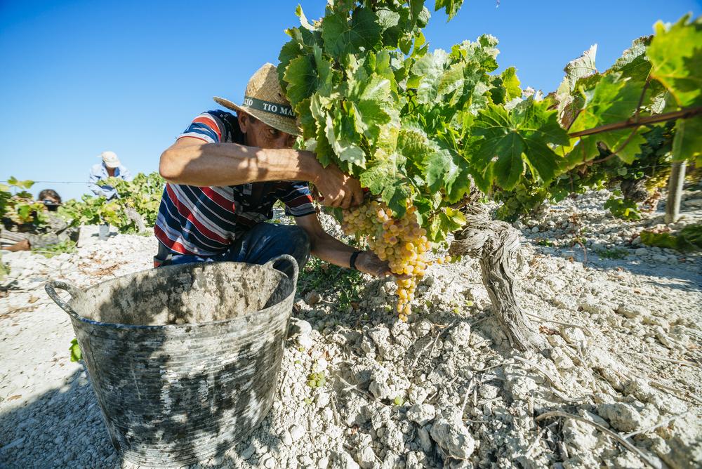 Top 6 Wine Bars & Tasting Experiences in and around Seville, best wine tastings in spain