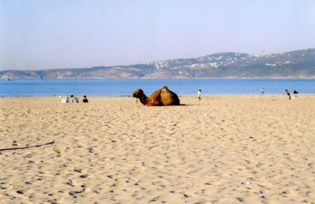 Ride a camel in tangier