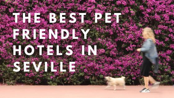 top pet friendly hotels seville