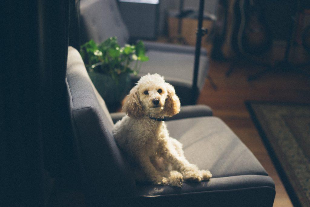 top pet-friendly hotels in spain