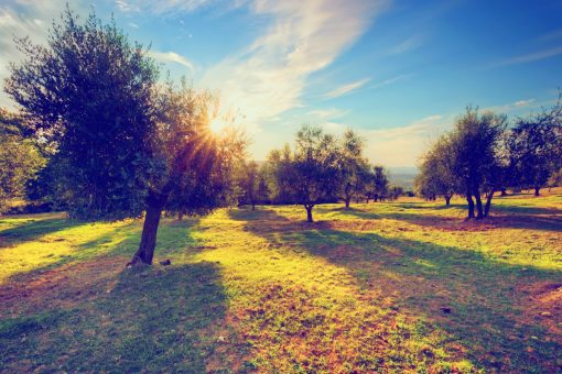 Walk through olive fields near granada on a walking tour
