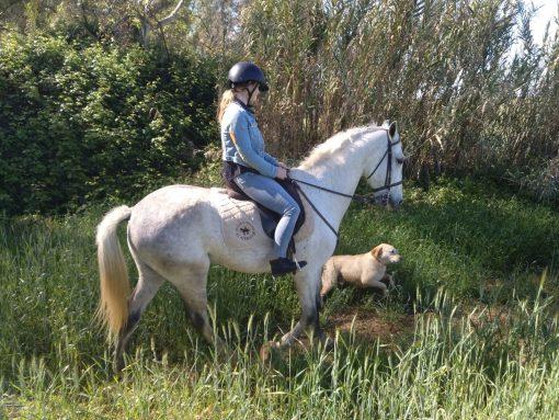Gift idea - Horse riding in Granada