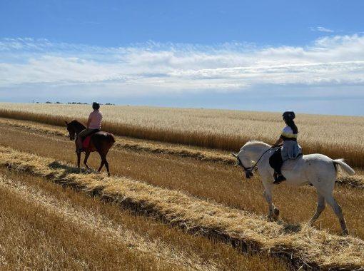 Horse riding in Granada