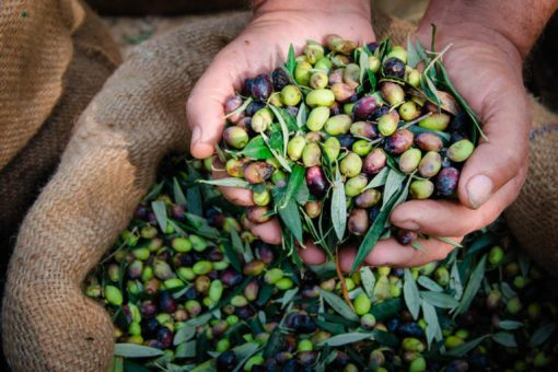 Online olive oil tasting in Seville