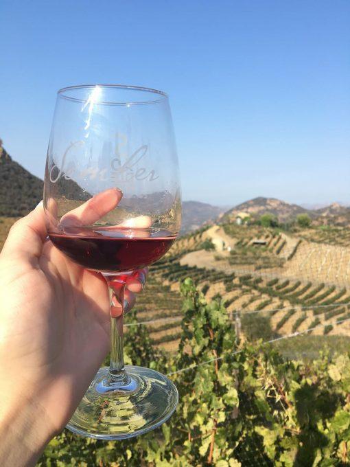 Wine tasting online food tour in Seville