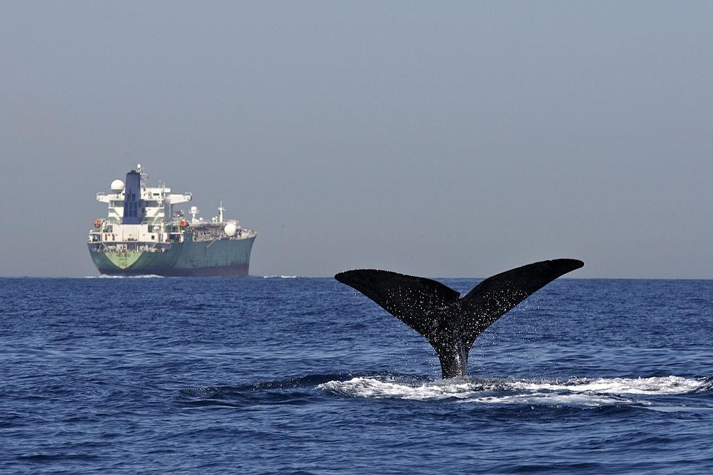 donde ver ballenas en Tarifa