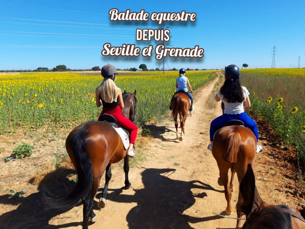 Balade équestre depuis Seville et Grenade