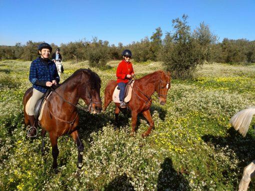 Promenade à cheval à Seville et Grenade